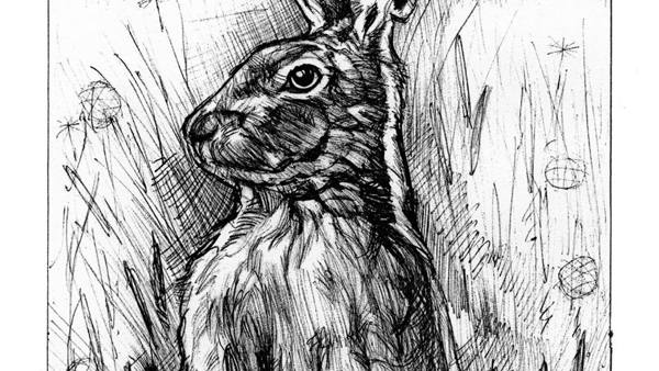 Greeting card: Hare